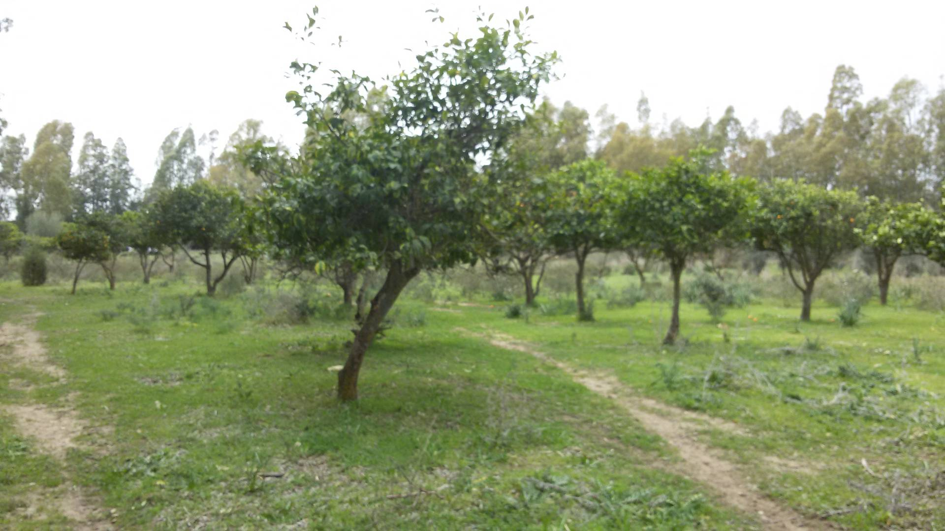 Terreno Agricolo in vendita a Quartucciu, 9999 locali, zona Località: S.Isidoro, prezzo € 132.000 | Cambio Casa.it