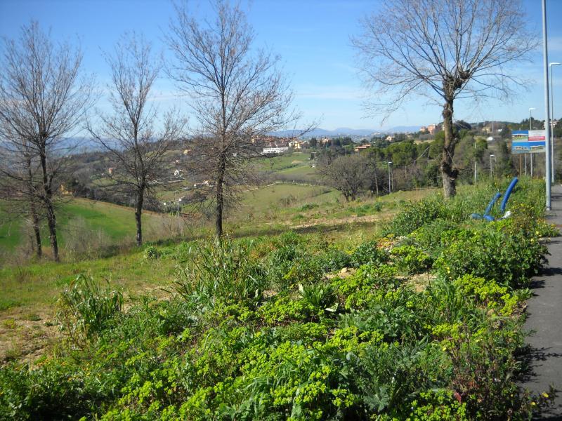 Terreno Agricolo in vendita a Macerata, 9999 locali, zona Località: zonaCorneto, prezzo € 70.000 | Cambio Casa.it