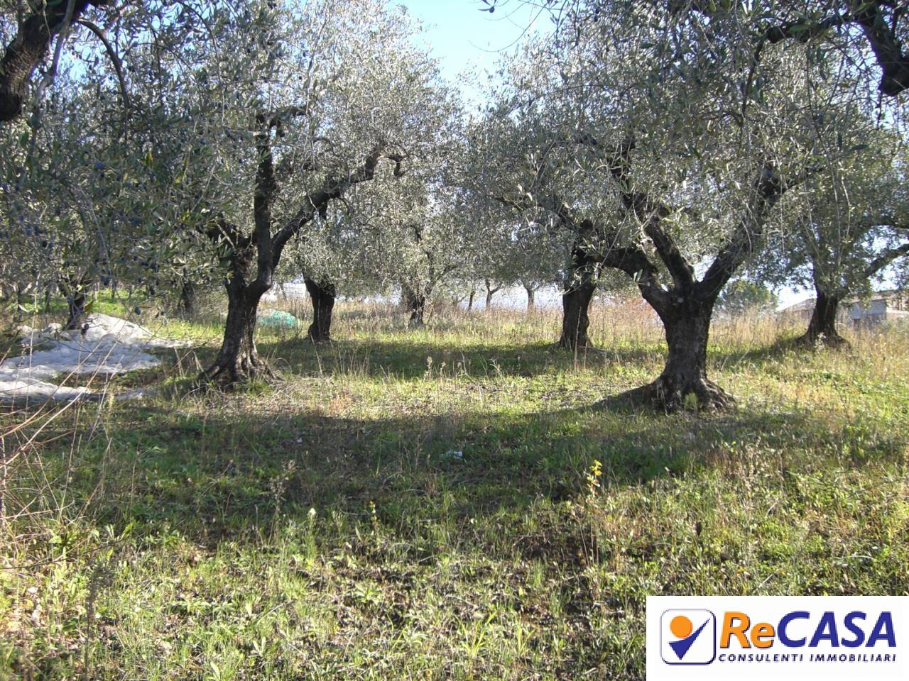 Terreno Agricolo in vendita a Montecorvino Rovella, 9999 locali, zona Zona: Macchia, prezzo € 9.500 | Cambio Casa.it