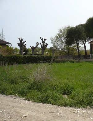 Terreno Edificabile Residenziale in Vendita a Giulianova