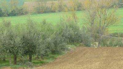 Terreno Agricolo in vendita a Corropoli, 9999 locali, zona Località: Bivio, prezzo € 8.000 | Cambio Casa.it