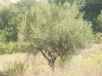 Terreno Edificabile Residenziale in Vendita a Sant'Omero