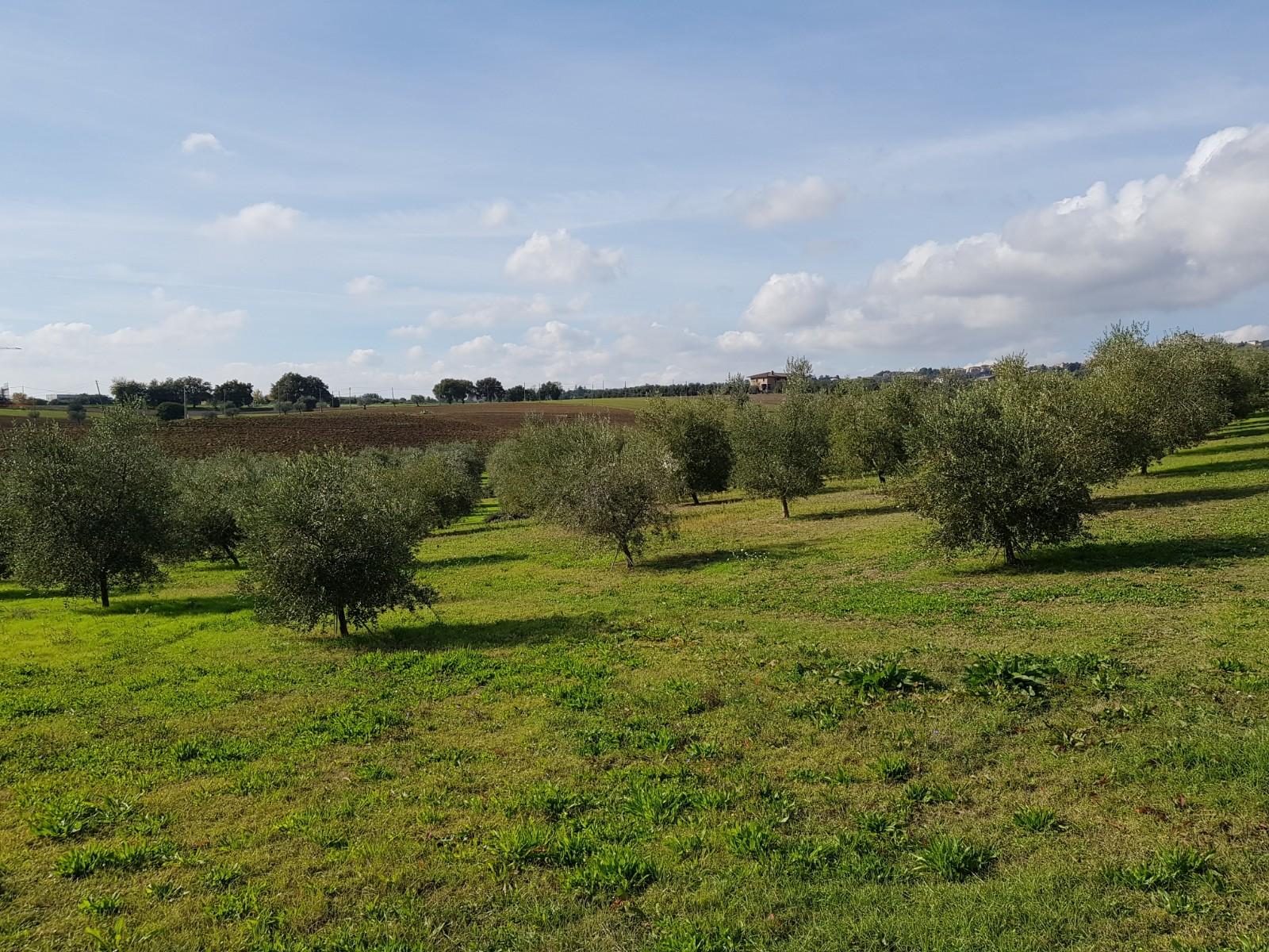 Terreno Agricolo in vendita a Morrovalle, 9999 locali, prezzo € 59.000 | CambioCasa.it
