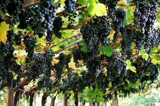 Azienda Agricola in vendita a Gorizia, 9999 locali, Trattative riservate | CambioCasa.it