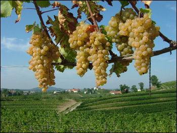 Terreno Agricolo in vendita a Gorizia, 9999 locali, Trattative riservate | CambioCasa.it