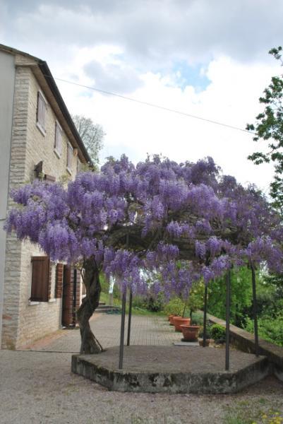 Rustico / Casale in vendita a Possagno, 8 locali, prezzo € 650.000 | CambioCasa.it