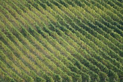 Terreno Agricolo in Vendita a Conegliano