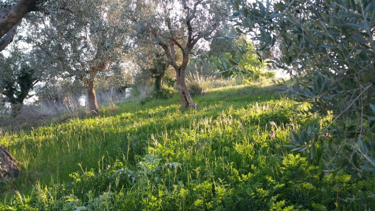 Terreno Agricolo in vendita a Ascoli Piceno, 9999 locali, zona Località: MonticelliAlto, prezzo € 30.000 | CambioCasa.it