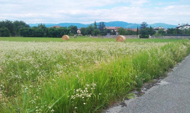 Terreno Edificabile Residenziale in Vendita a Premariacco