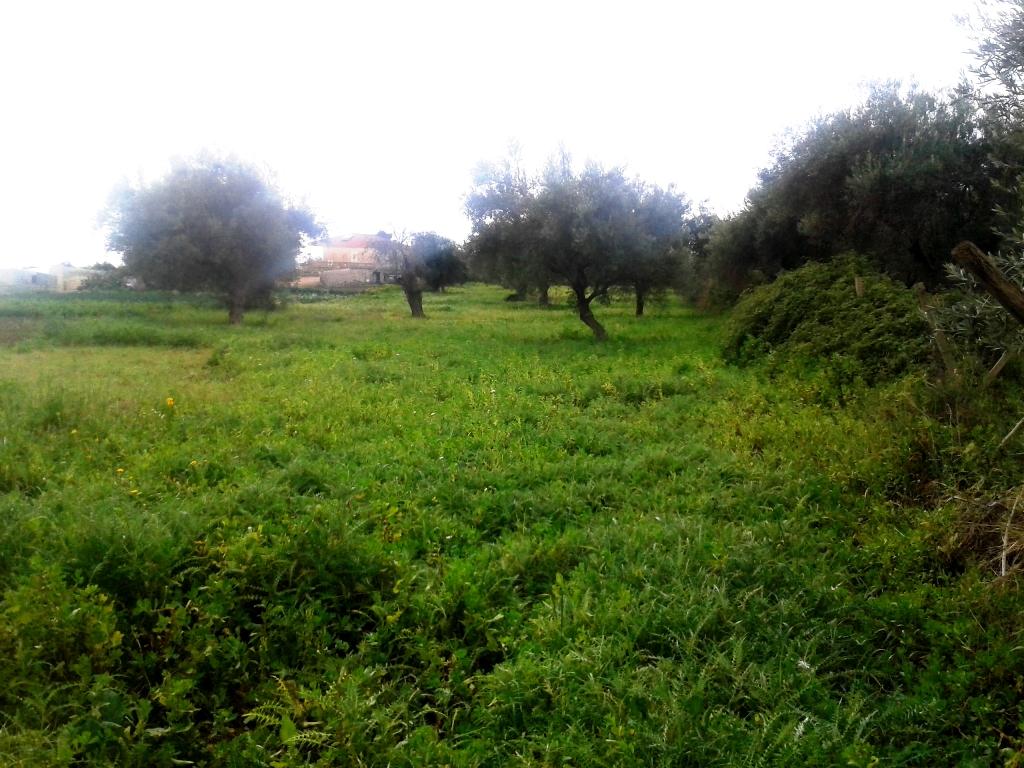 Terreno Agricolo in vendita a Scicli, 9999 locali, zona Zona: Scicli, prezzo € 10.000 | Cambio Casa.it