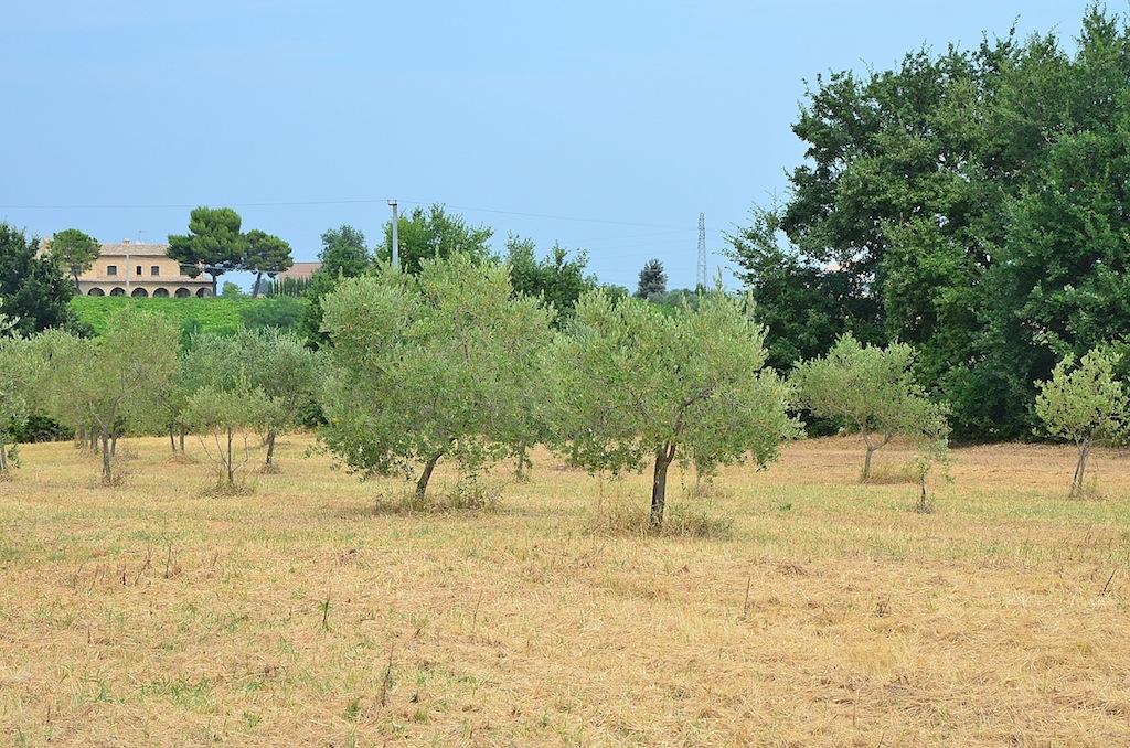 Terreno Agricolo in vendita a Città Sant'Angelo, 9999 locali, prezzo € 138.000 | Cambio Casa.it