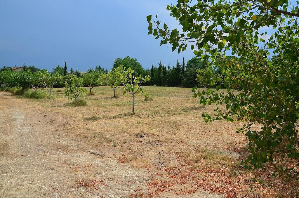 Terreno Agricolo in vendita a Collecorvino, 9999 locali, zona Zona: Congiunti, prezzo € 250.000 | Cambio Casa.it