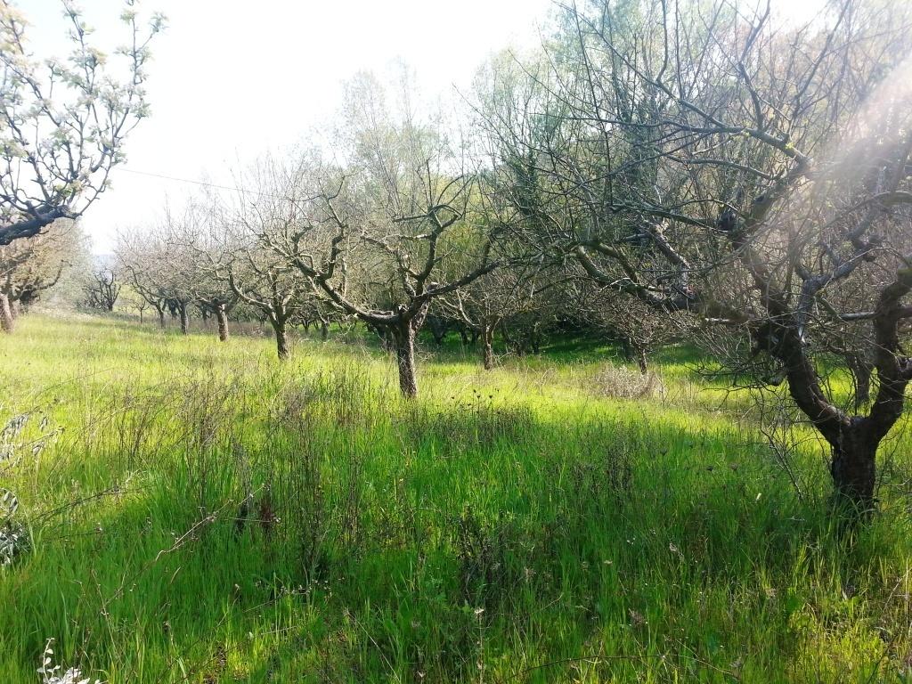 Terreno Agricolo in vendita a Monteprandone, 9999 locali, zona Località: Collinare, prezzo € 30.000 | CambioCasa.it
