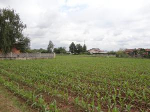 Terreno Agricolo in Vendita a San Vito al Torre