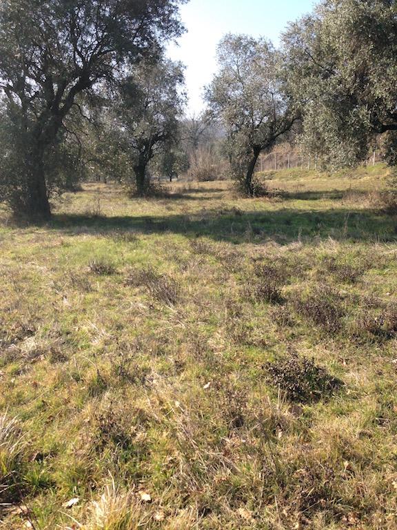 Terreno Agricolo in vendita a Padenghe sul Garda, 9999 locali, zona Località: *COLLINARE*, prezzo € 850.000 | Cambio Casa.it