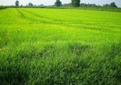 Terreno Agricolo in Vendita a Capriate San Gervasio