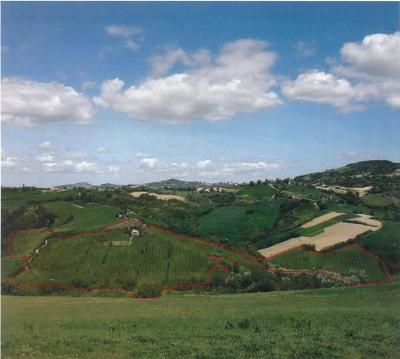 Terreno Agricolo in Vendita a Montefiore Conca