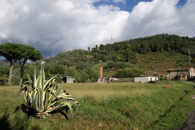 Terreno edificabile in Vendita<br>a Pietrasanta