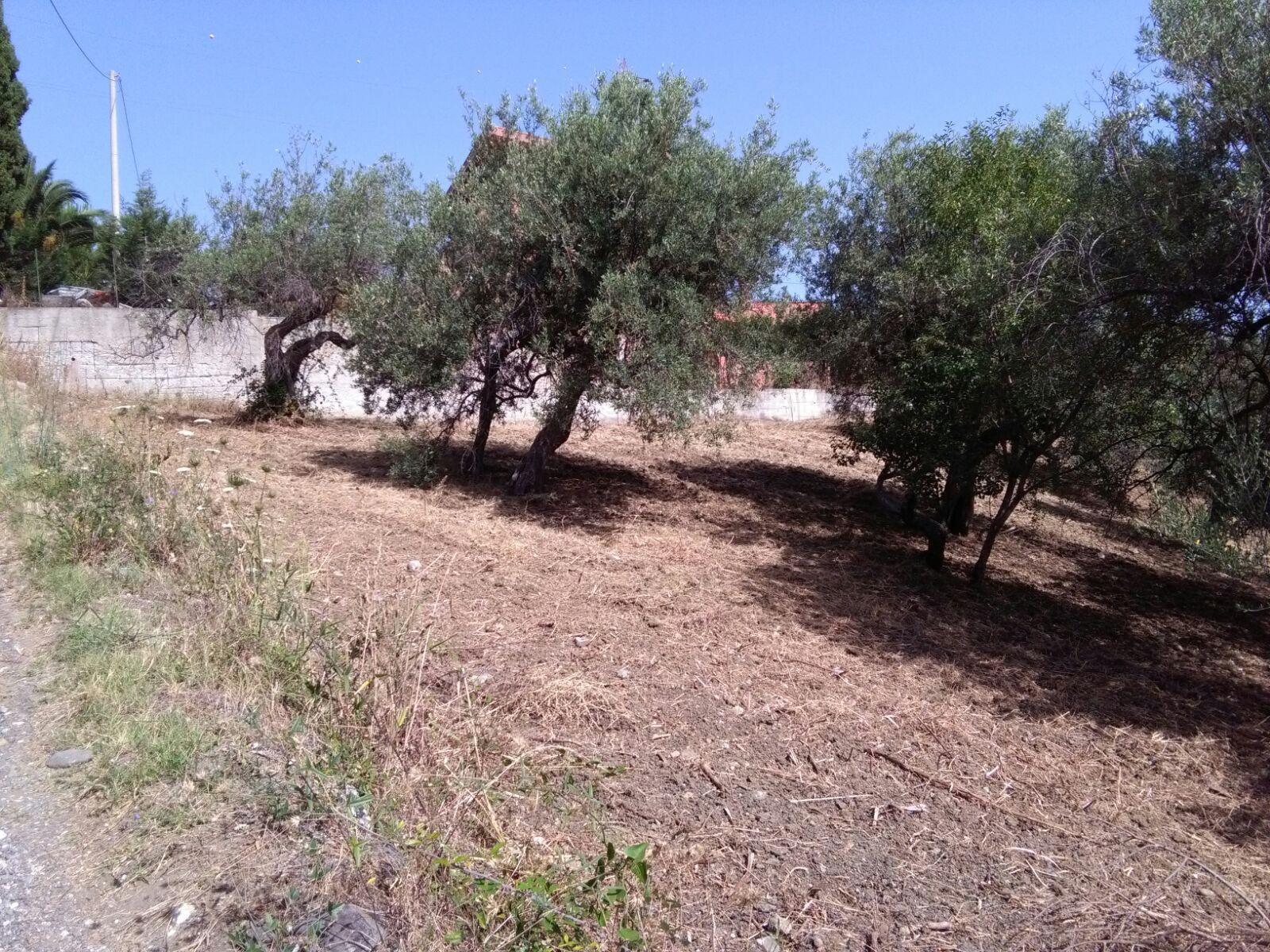 Terreno Agricolo in vendita a Patti, 9999 locali, prezzo € 38.000 | Cambio Casa.it