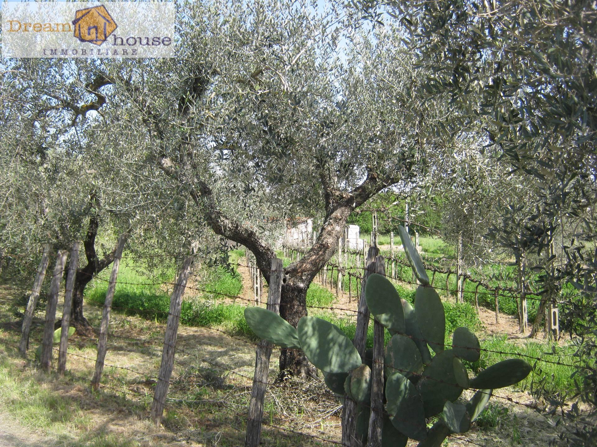 Terreno Agricolo in vendita a Lanuvio, 9999 locali, prezzo € 45.000   CambioCasa.it