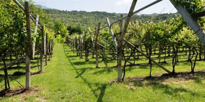 Terreno Agricolo in vendita a Besenello, 9999 locali, zona Zona: Acquaviva, prezzo € 183.000   Cambio Casa.it
