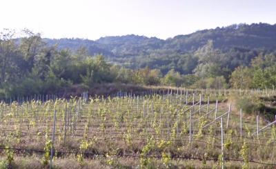 Terreno Agricolo in Vendita a Cavedine