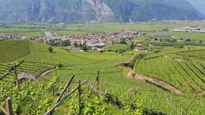 Attività Commerciale in Affitto a San Michele all'Adige