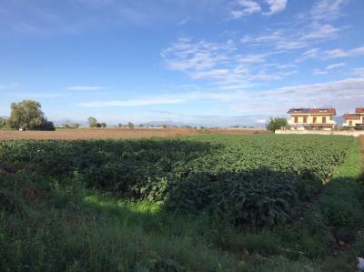 Terreno edificabile in Vendita a San Tammaro