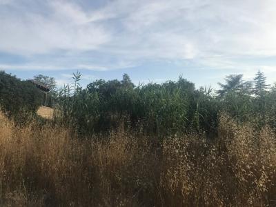 Terreno Agricolo in Vendita a Fiumicino