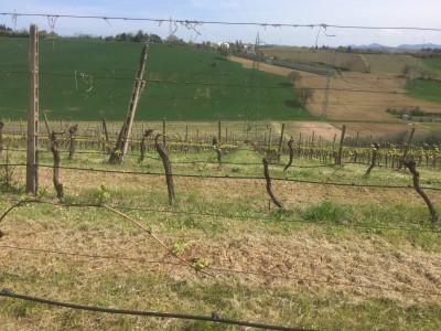 Azienda Agricola in Vendita a Rimini