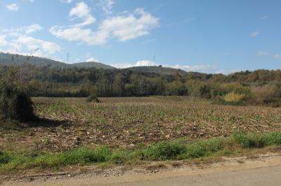 Terreno Agricolo in Vendita a Esperia