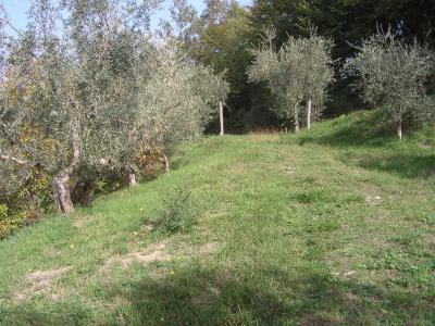 Terreno uliveto in Vendita a Arpino