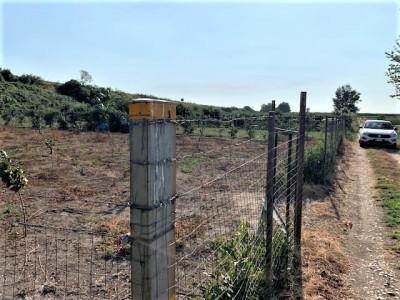 Terreno Agricolo in Vendita a Acerra