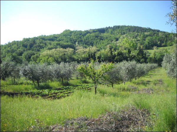 ascoli-piceno vendita quart: rosara ciccarelli-daniela