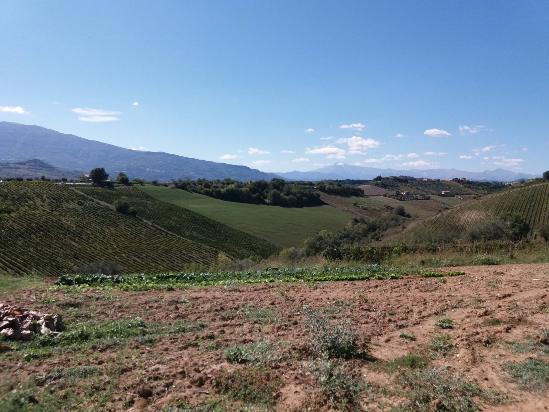 Terreno Edificabile Residenziale in vendita a Castel di Lama, 9999 locali, zona Località: alta,collina, prezzo € 95.000 | CambioCasa.it