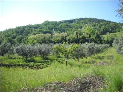 Agricolo in Vendita a Ascoli Piceno