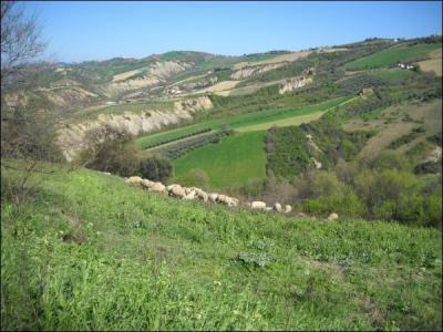 Agricolo in Vendita a Ancarano