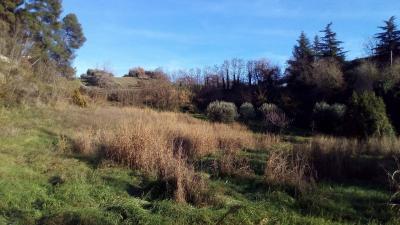 Terreno Agricolo in Vendita a Ascoli Piceno