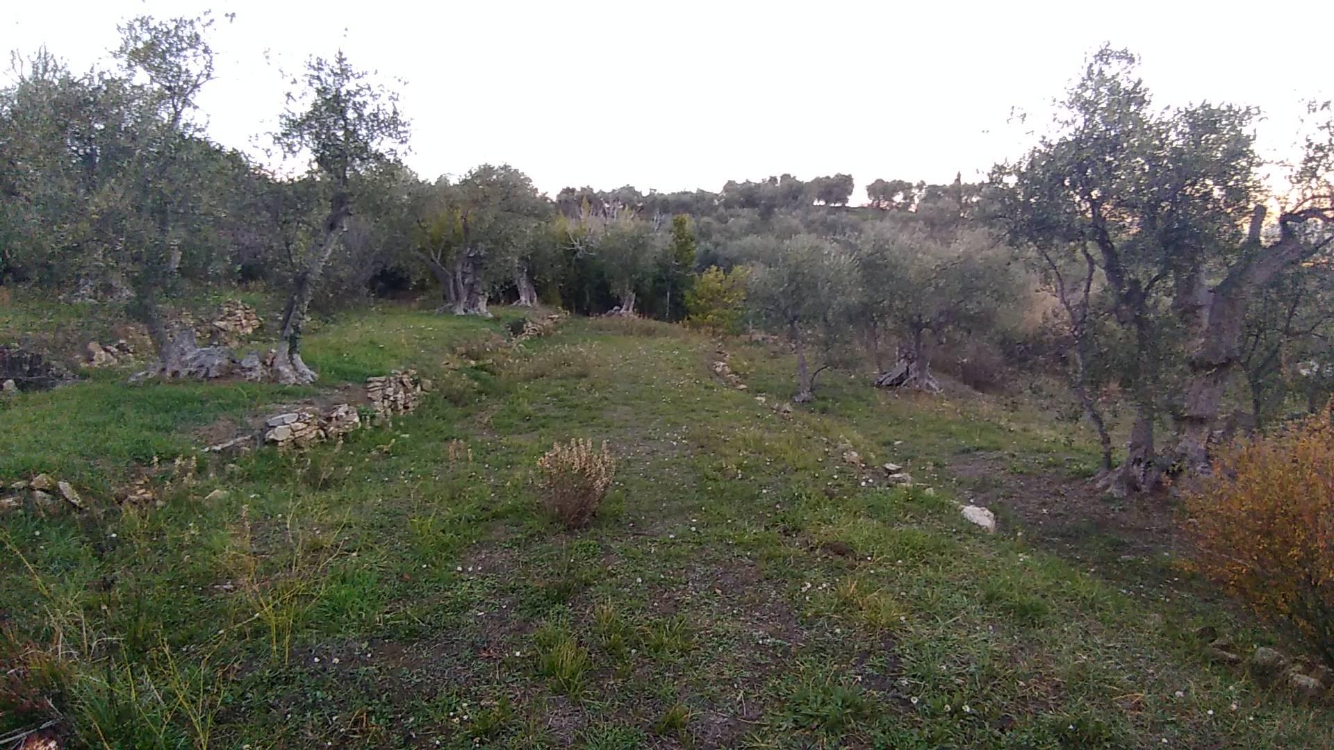 Terreno Agricolo in vendita a Diano Marina, 9999 locali, prezzo € 95.000 | PortaleAgenzieImmobiliari.it