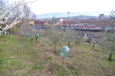 Terreno Agricolo in Vendita a San Giovanni Valdarno
