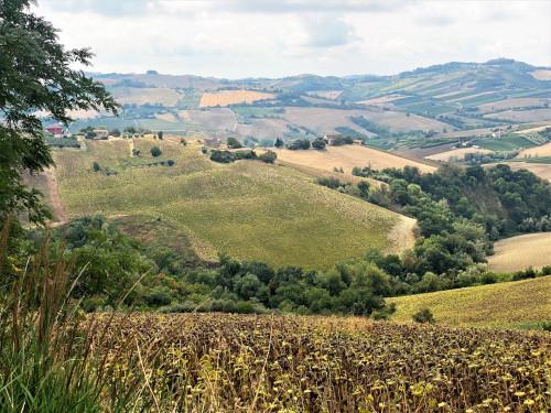 Terreno Agricolo in Vendita a Carassai