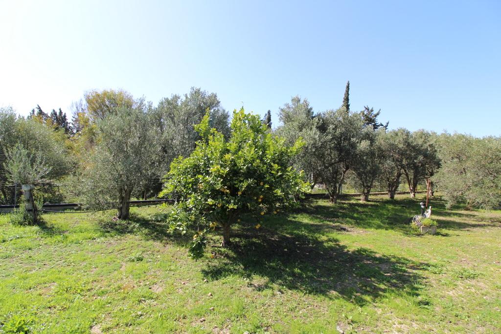 Terreno Agricolo in vendita a Quartucciu, 9999 locali, zona Località: S.Isidoro, prezzo € 79.000 | Cambio Casa.it
