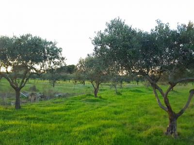 Agricultural Land for Sale in Castelvetrano