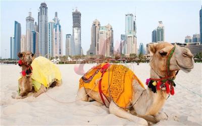 Appartamento in vendita Dubai Riviera - 50% si paga dopo 3 anni