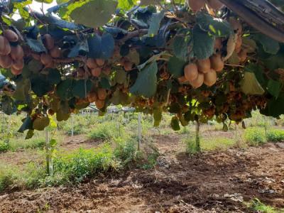 Terreno Agricolo in Vendita a Latina