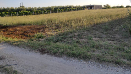 Terreno Agricolo in Vendita a Velletri