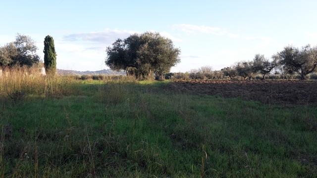 Terreno Agricolo in vendita a Cepagatti, 9999 locali, prezzo € 200.000 | CambioCasa.it