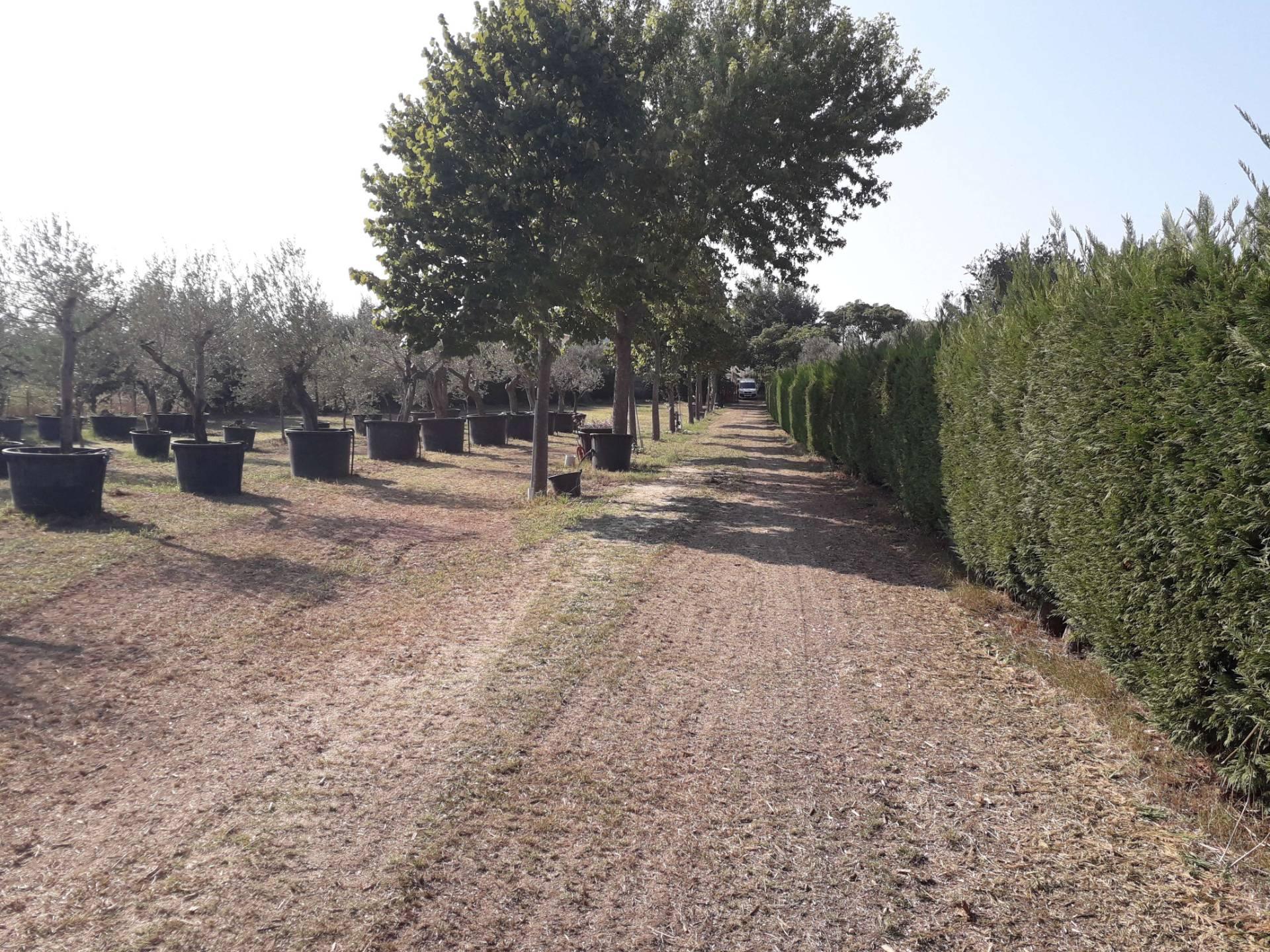 Terreno Agricolo in vendita a Cepagatti, 9999 locali, prezzo € 100.000 | CambioCasa.it