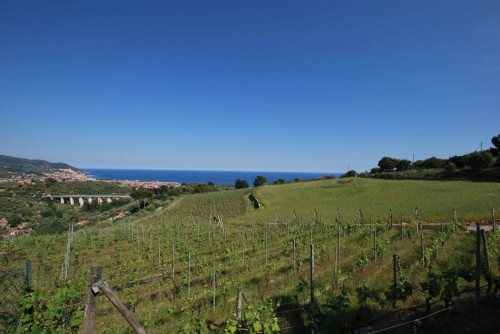 Land plot for Sale in Diano Marina