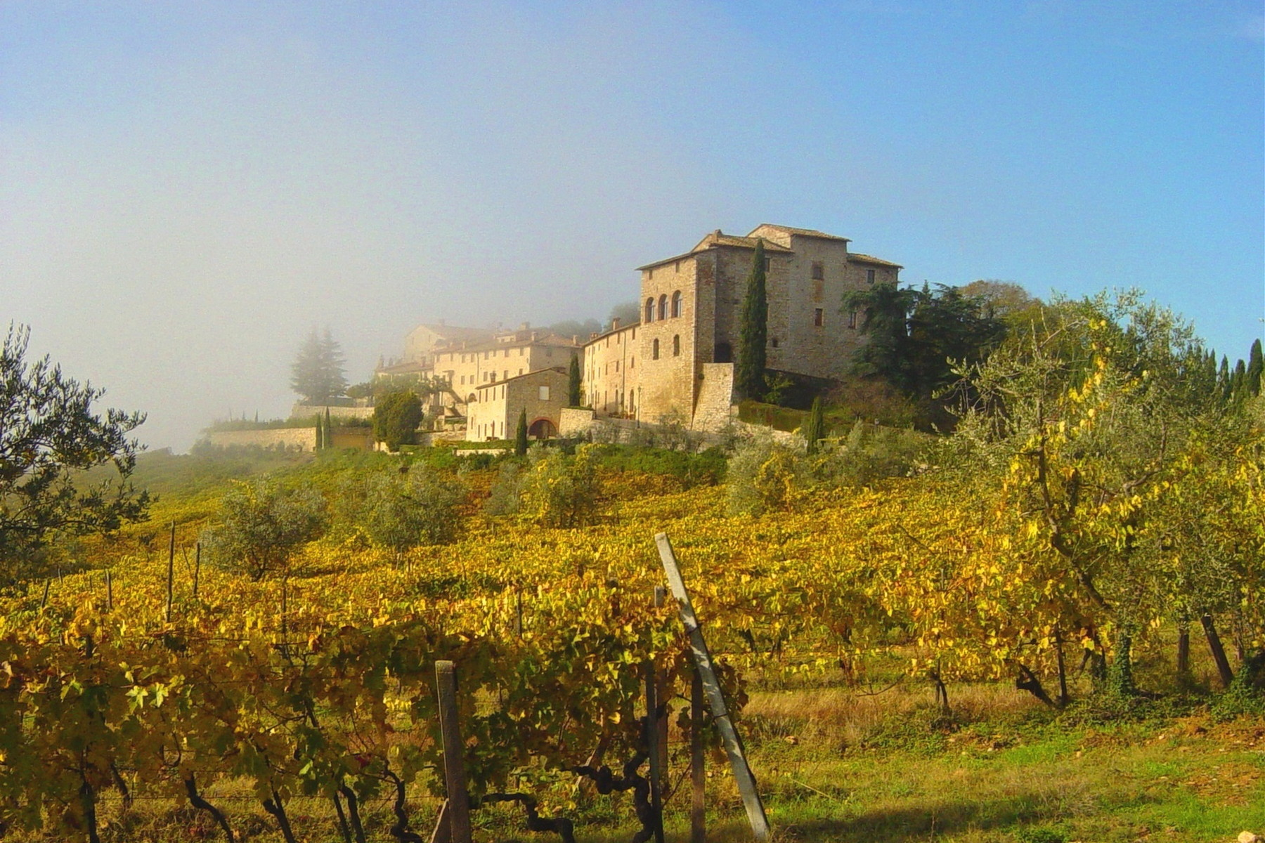 Historic castle in chianti with vineyard